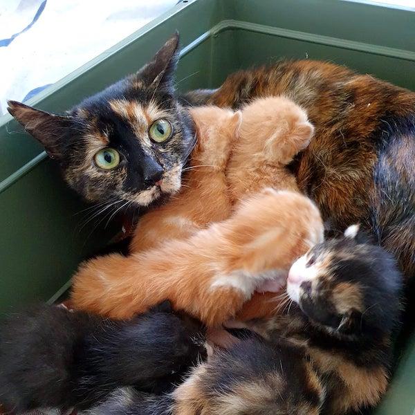moeder met 6 kittens 20-3-2021